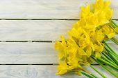 stock photo of daffodils  - Yellow daffodils on a bright wood background - JPG