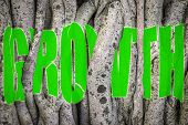 picture of twist  - Conceptual Image Of The Word Growth Twisted And Torn Behind The Vines Of A Tree - JPG