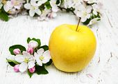 foto of apple blossom  - apple and apple tree blossoms on a wooden background - JPG