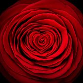 foto of desire  - Love rose concept as a red flower design element shaped as a circle with a heart shape inside as a symbol and icon for valentines desire or mothers day expression of affection and passion or wedding object - JPG