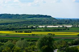 pic of rape-field  - View of the Vistula river valley with flowering oilseed rape fields in the area of Janowiec  - JPG
