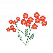Постер, плакат: Blossoming Of Red Yarrow Flowers Or Achillea Millefolium Flowers