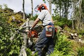 stock photo of chainsaw  - lumberjack - JPG