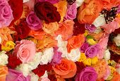 Beautiful Roses In An Outdoor Market poster
