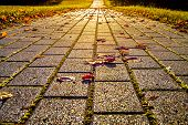 View To Perspective Of The Path Of Paving Stones With Colorful Leaves In Autumn As Background poster