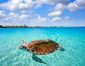 Cancun beach turtle photomount at Hotel Zone in Mexico poster