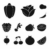 Vector Illustration Of Vegetarian And Organic Icon. Collection Of Vegetarian And Food Stock Symbol F poster