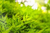 Closeup Selective Focus Of Beautiful Green Leaves On Blurred Greenery Background In Garden With Copy poster