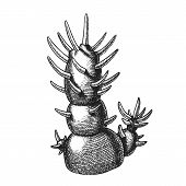Decorative Houseplant Cactus Hand Drawn . Long Sharp Spines Decorative House Room Or Office Cactus C poster