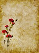 Red carnations texture pic.