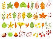 Colorful Autumn Leaves. Autumnal Yellow Leaf, Forest Nature Orange Leafage And September Red Leaves. poster