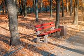 Beautiful Scenic Alley With Benches Between Trees And Golden Colored Foliage Lush At City Park. Walk poster