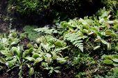 Carnivorous Venus Fly Traps Dionaea Muscipula And Sundews Drosera Capensis Plants Secrete Digestive  poster