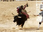 picture of brahma-bull  - bucking action during the bull rinding competition at a rodeo - JPG
