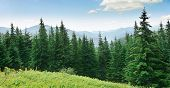 stock photo of mountain-high  - Beautiful pine trees on background high mountains - JPG