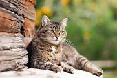 stock photo of tabby cat  - beautiful cat lying in the street summer day - JPG