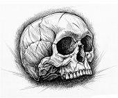 pic of cross-hatch  - Skull traditional ballpoint pen drawing - JPG