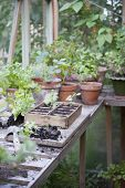 stock photo of workbench  - Potting crate on workbench in greenhouse - JPG