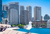 stock photo of suny  - Seagull in front of Sydney harbor city in suny day - JPG