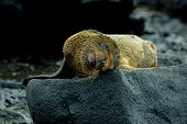 pic of sea lion  - wet baby sea lion in san cristobal galapagos islands ecuador - JPG