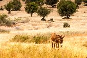 image of wild donkey  - Brown donkey at field at summer - JPG