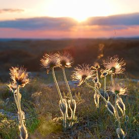 stock photo of defloration  - Sunset with deflorated flowers  - JPG