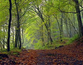 image of stitches  - Dirt road in the mixed forest (beech oak and hornbeam) in a misty day autumn Saarland / Germany. Stitched
