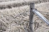 pic of barbed wire fence  - Close - JPG