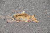image of mammal  - Dead Animal Mammal on the Asphalt Road - JPG