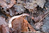 image of crawl  - An earthworm crawling over some leaves in a wood - JPG