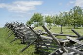 stock photo of split rail fence  - A split rail fence separating an orchard from another field  - JPG