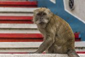 stock photo of cave  - A Macaque monkey - JPG
