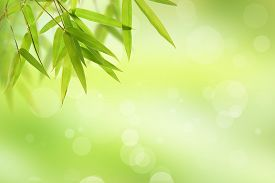 foto of bamboo  - bamboo leaf and abstract green background bokeh - JPG