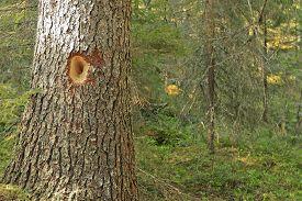 pic of woodpecker  - Close - JPG
