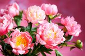stock photo of flower vase  - beautiful bouquet of pink peony - JPG