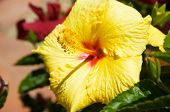 stock photo of phallic  - Phallic yellow flower - JPG