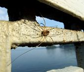 foto of huntsman spider  - Spider sitting on the fence near yhe water - JPG