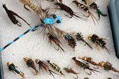 image of mayfly  - Fly fisherman - JPG