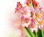 stock photo of gladiolus  - Gladiolus Autumn Flower Border Design - JPG