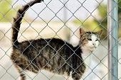 Cute Brown Black Stripped Cat Stuck His Face Out The Cage Standing Behind Jail, Concept Of Animal Sh poster