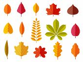 Fall Leaves. Colorful Autumn Leaves, Leaf Chestnut Elm Oak, Maple Forest With Yellow And Orange Foli poster