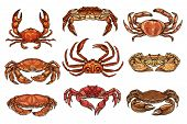 Crab And Lobsters Seafood Isolated Sketches. Vector Marine Crustacean Hermit, Hairy And King, Opilio poster