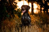 Purebred Dog Sitting Among Trees In The Forest Open His Mouth poster