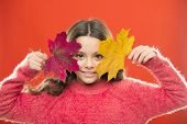 Magic Colors. Amazing Autumn. Little Child Hold Maple Leaves Changing Color. Small Girl Smile With A poster