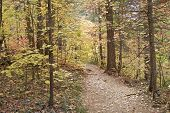 West Fork Trail in Fall