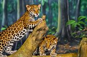 image of tiger cub  - Two little Jaguar Cubs playing on the tree branch - JPG
