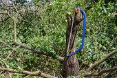 stock photo of buck teeth  - Blue bucksaw with yellow pen on against the cut tree - JPG