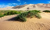 image of quicksand  - golden Gobi with shrub  - JPG