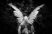 stock photo of cherub  - Winged angel gravestone back view in black and white - JPG