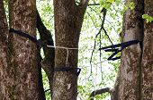 pic of arborist  - Branches of tree are cabled and braced with flexible strand cables and braces to reduce stress damage from high winds - JPG